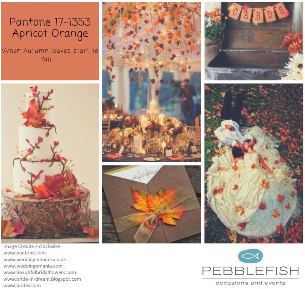 Picture montage fro pantne colour Apricot Orange