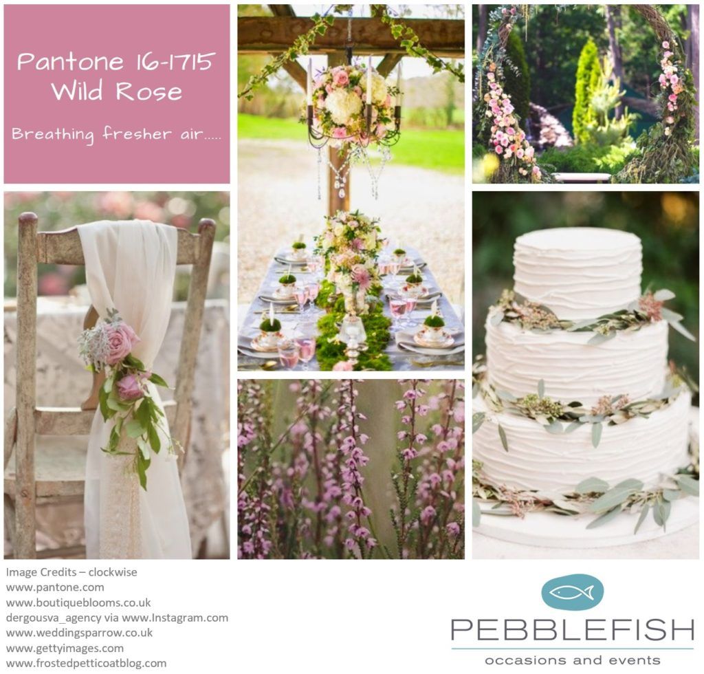 Picture Montage for pantone colour Wild Rose