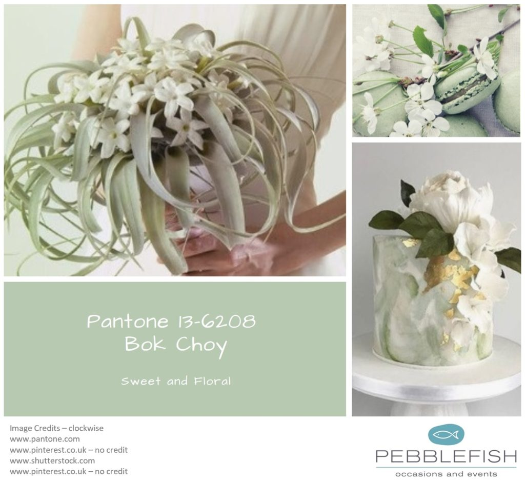 Picture monatge for pantone colour Pak Choy